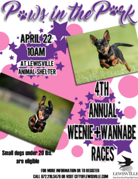 paws in the park in lewisville on saturday  weiner dog
