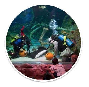 halloween events at sea life aquarium grapevine my dallas mommy. Black Bedroom Furniture Sets. Home Design Ideas